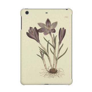 Large Purple Spring Crocus Botanical Illustration