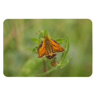 Large Skipper Butterfly Magnet