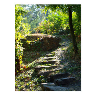 Large stone steps surrounded by trees on the path postcard
