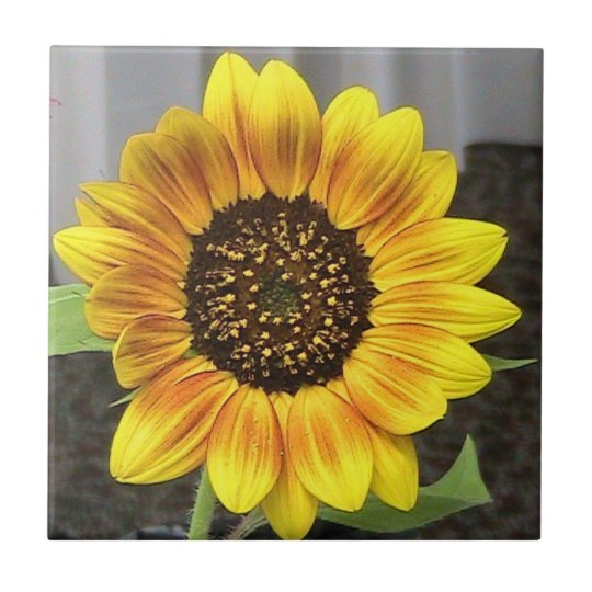 Large Sunflower Decorative Tile