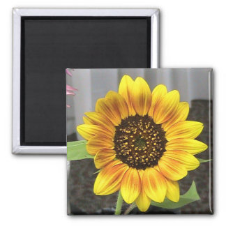 Large Sunflower design - round or square Square Magnet