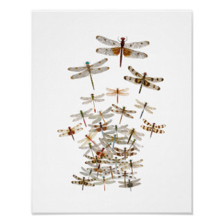 Large Swarm of Dragonflies Poster