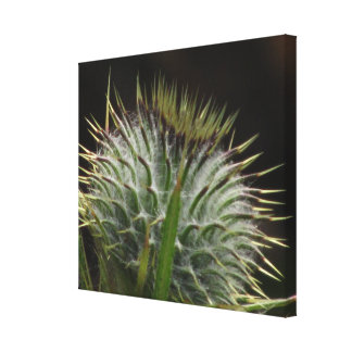 Large Thistle Pod Gallery Wrap Canvas