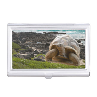 Large turtle at the sea edge business card holder