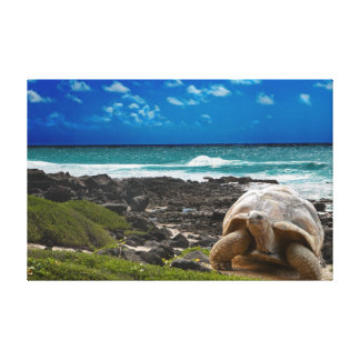 Large turtle at the sea edge canvas print