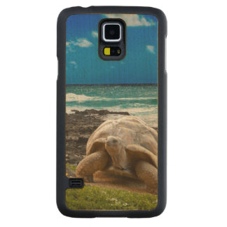 Large turtle at the sea edge carved maple galaxy s5 case