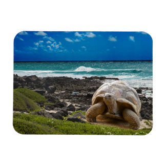 Large turtle at the sea edge rectangular photo magnet