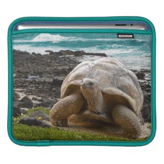 Large turtle at the sea edge iPad sleeve
