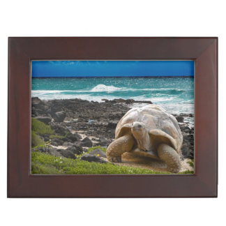 Large turtle at the sea edge keepsake box