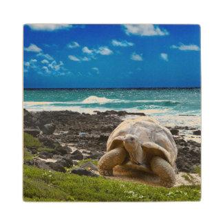 Large turtle at the sea edge wood coaster