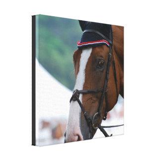 Large Warmblood Horse Canvas Print