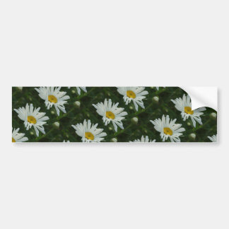 Large White and yellow Daisy Aster flowers Bumper Sticker