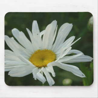 Large White and yellow Daisy Aster flowers Mouse Pad