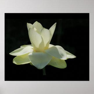 Large White Lotus Flower Poster