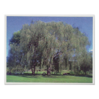 Large Willow Tree Poster