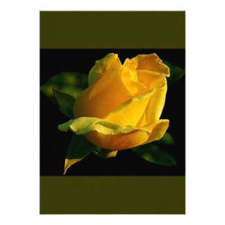 Large Yellow Rose Personalised Announcement