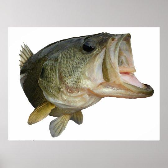 Largemouth Bass fish Poster