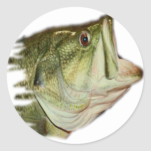 LargeMouth Bass from FishHeads Collection Stickers