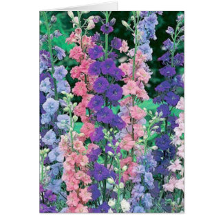 Larkspur Greeting Card