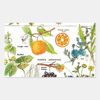Larousse Fruit Orange Pear Grape Painting Rectangular Sticker