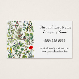 Larousse Pine Cone Tree Flower Branch Painting