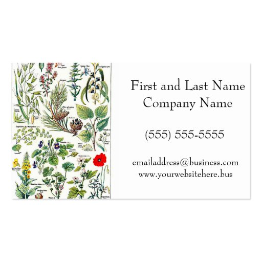 Larousse Pine Cone Tree Flower Branch Painting Business Card Template
