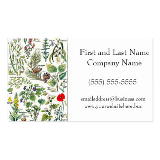 Larousse Pine Cone Tree Flower Branch Painting Pack Of Standard Business Cards