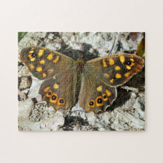 Lasiommata Westwood Butterfly Photo Puzzle