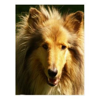 Lassie Collie Postcard