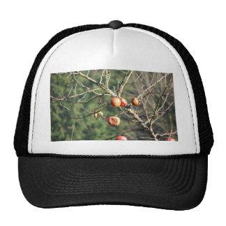 Last of the Season Hats