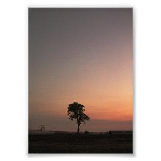 last tree photo print