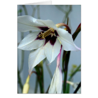 Late Summer Lily Card