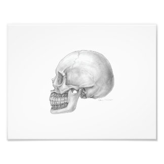 Lateral Skull Illustration Photo Print