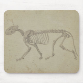 Lateral View of a Tiger Skeleton, finished study f Mouse Mat