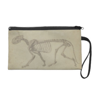 Lateral View of a Tiger Skeleton, finished study f Wristlet Purse