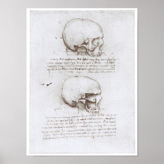 Lateral View of the Skull, Leonardo da Vinci Poster