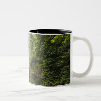 Latourell Falls & Bridge Columbia River Gorge Two-Tone Coffee Mug