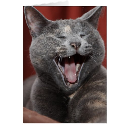 Laugh it up! greeting card