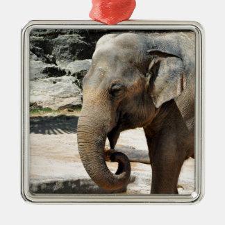 Laughing Asian Elephant Zoo wildlife Christmas Ornament