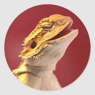 Laughing Bearded Dragon Round Sticker