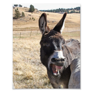 Laughing Donkey Photograph
