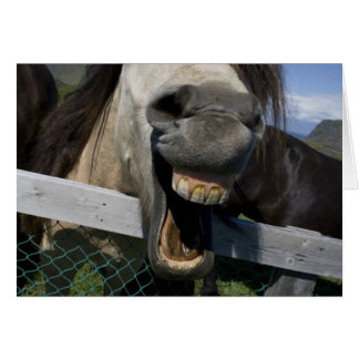 Laughing Horse Greeting Card
