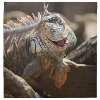 Laughing Iguana Photo Napkin