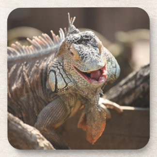 Laughing Iguana Photography Coaster