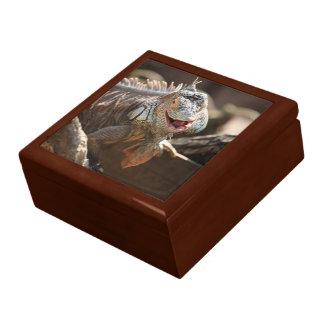 Laughing Iguana Photography Gift Box