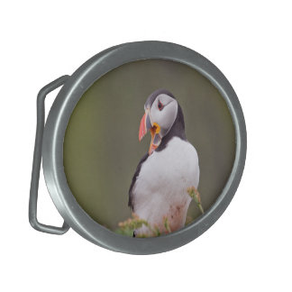 Laughing Puffin Buckle Belt Buckle