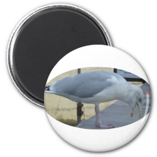 Laughing Seagull Magnet