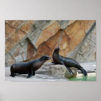 Laughing Seals Print