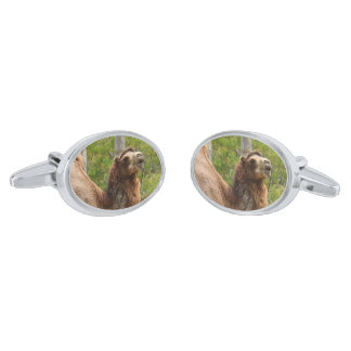 Laughing Smiling Camel Nature Photo Silver Finish Cuff Links