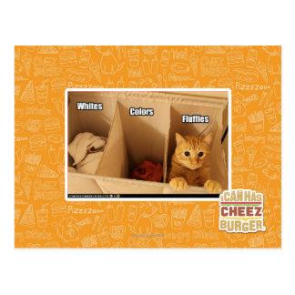 Laundry Cat Postcard